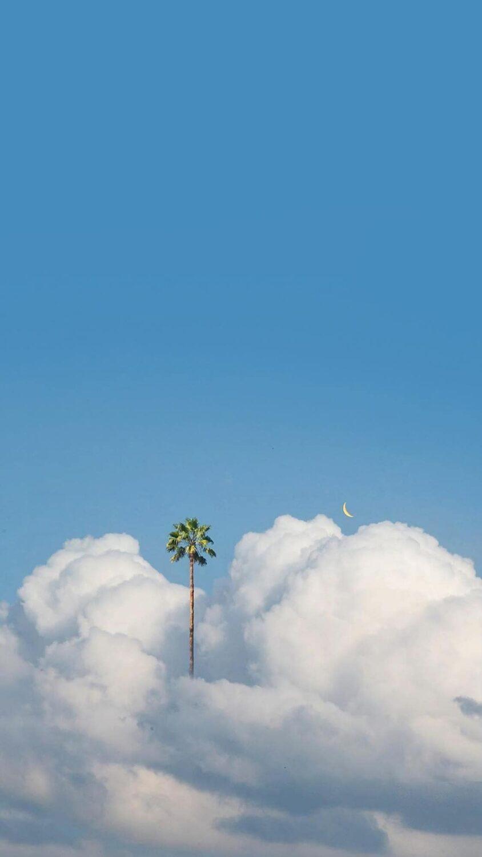 Coconut tree in the sky